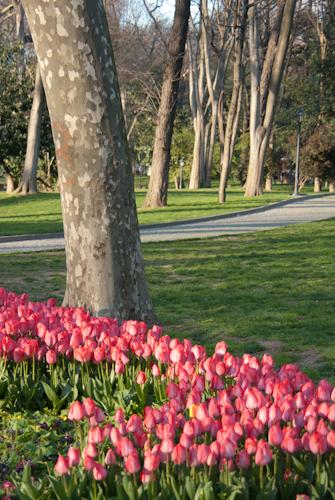 2011-04-22 83 Istanbul - Lalele