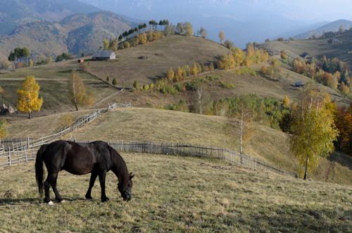 2012-10-26 59 Magura