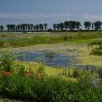 In delta Neajlovului
