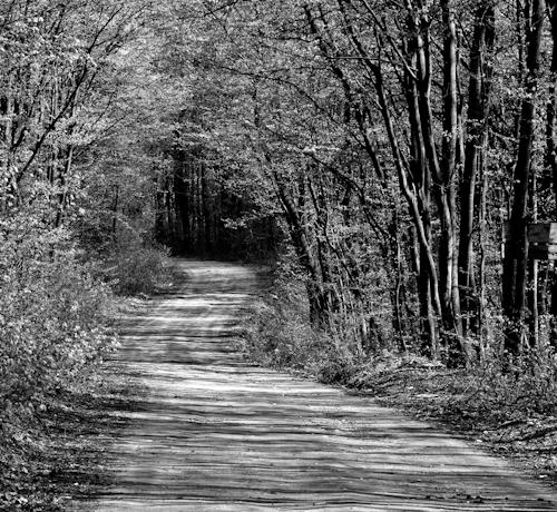2012-04-07 06 Padurea Comana in alb si negru