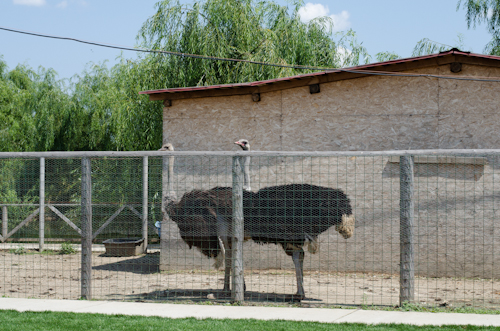 2013-07-14 101 Ferma animalelor