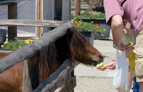 2013-07-14 103 Ferma animalelor