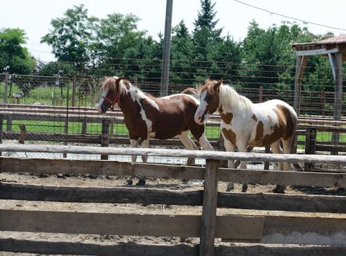 2013-07-14 106 Ferma animalelor