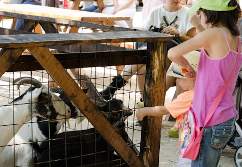 2013-07-14 117 Ferma animalelor