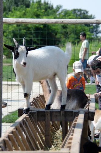 2013-07-14 13 Ferma animalelor