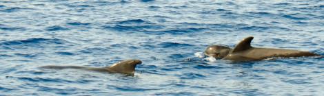 În căutarea balenelor