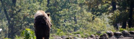 Printre urși și englezi