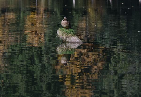 2014-10-10 329 Lacul Rosu