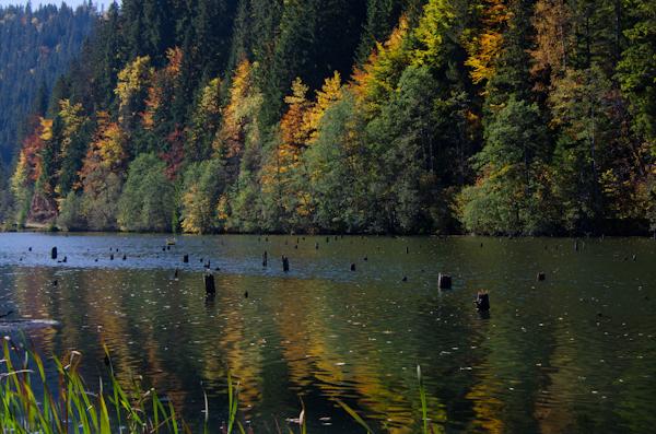 2014-10-10 334 Lacul Rosu