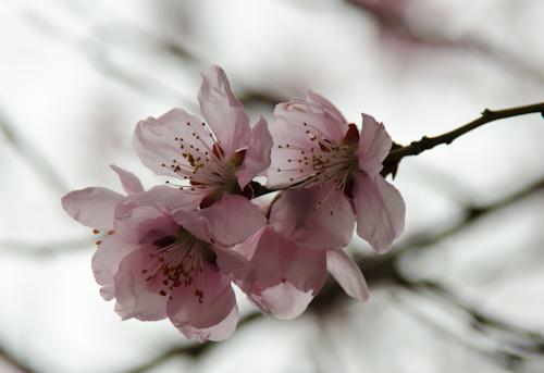 2013-04-05 04 flori