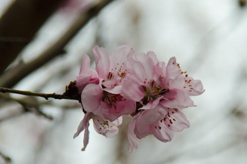 2013-04-05 05 flori
