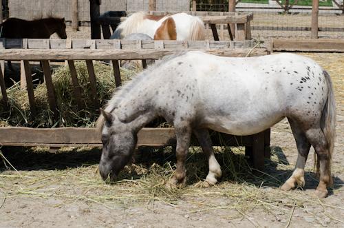 2013-07-14 96 Ferma animalelor