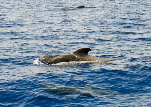 2013-09-11 57 Tenerife-Dupa balene cu Shogun