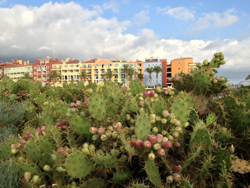 2013-09-16 110 Tenerife-Playa Paraiso