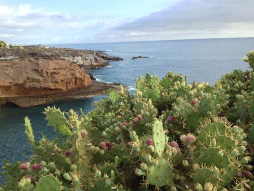 2013-09-16 114 Tenerife-Playa Paraiso