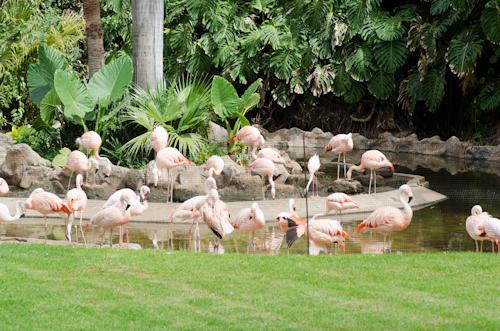 2013-09-14 155 Tenerife-Parcul Loro