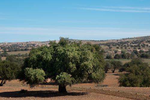2014-03-24 200 Maroc - In copacul de argan