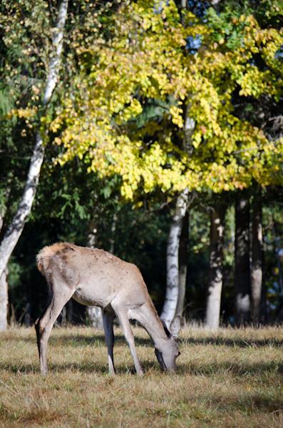 2014-10-11 373 Parcul Ivo