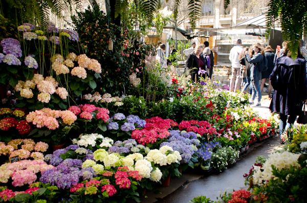 2016-04-10 59 Paris-Ile de la Cite-Marché aux fleurs