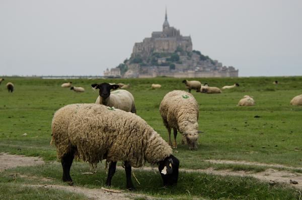2016-06-05 208 Mont Saint-Michel